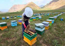 دانلود تحقیق زنبورداری
